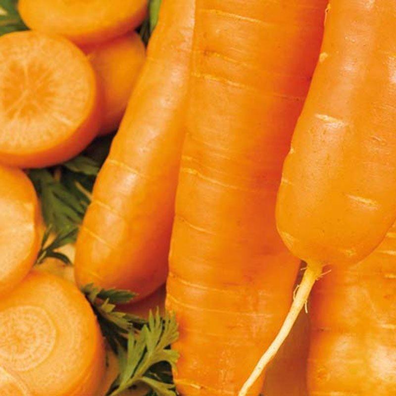 Siemenpussi Porkkana Chantenay Red Cored 3