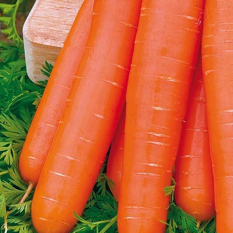 Siemenpussi Porkkana Nantaise 2