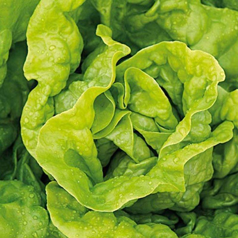 Siemenpussi Salaatti Kerä- Attractie