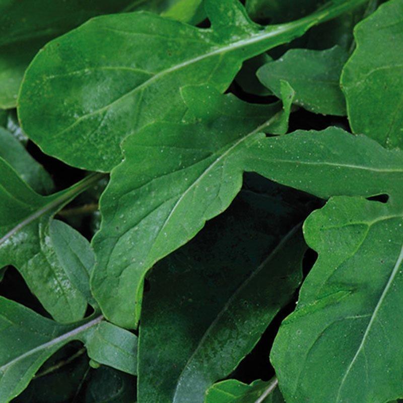 Siemenpussi Salaatti Rukola