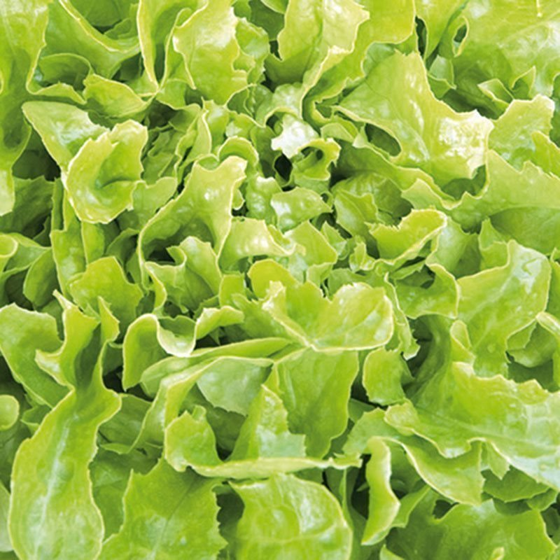 Siemenpussi Salaatti Tammenlehti- Salad Bowl